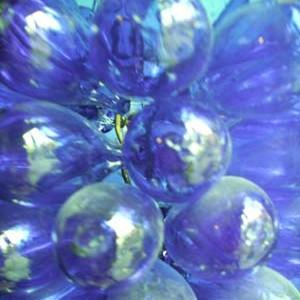 Grape lights 013